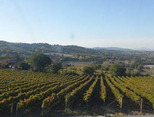 Tour Umbria enogastronomico, le vigne da visitare