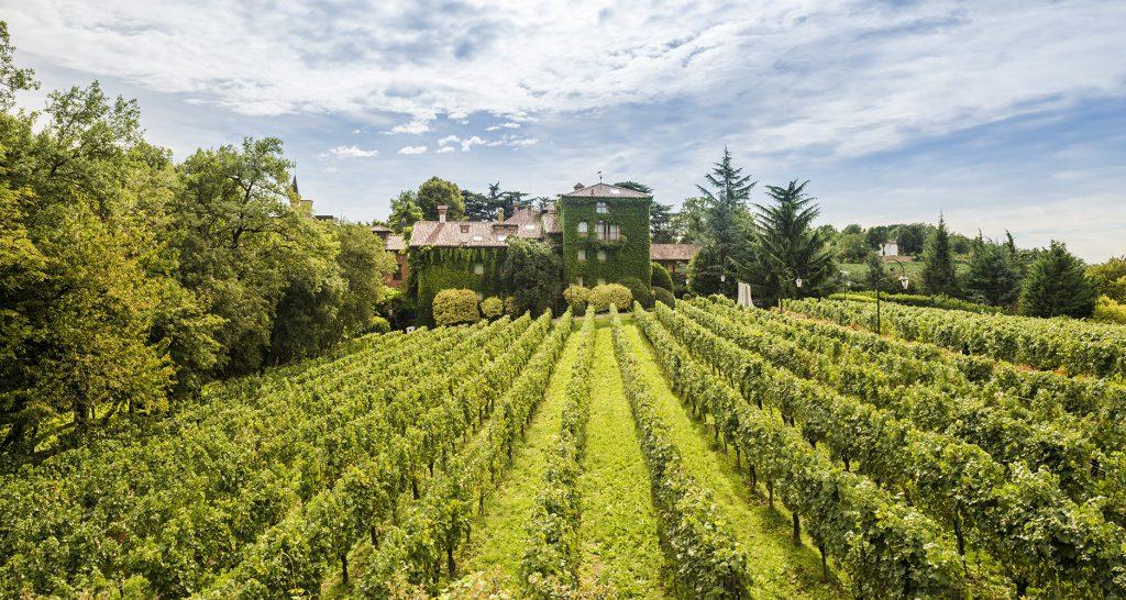 Le viti in Franciacorta