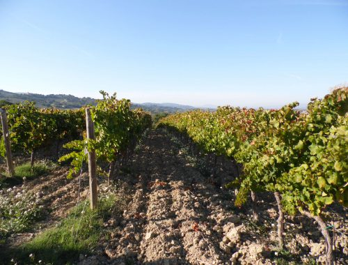 A landscape of the tour in Umbria