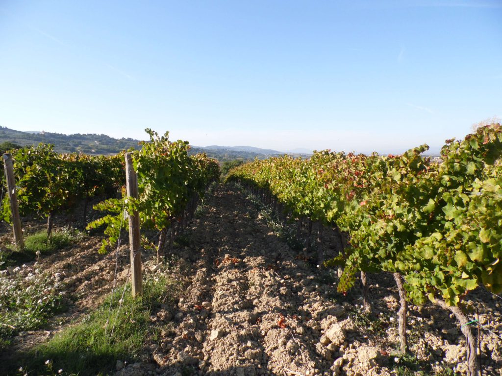 Vineyards to visit during a tour in Umbria