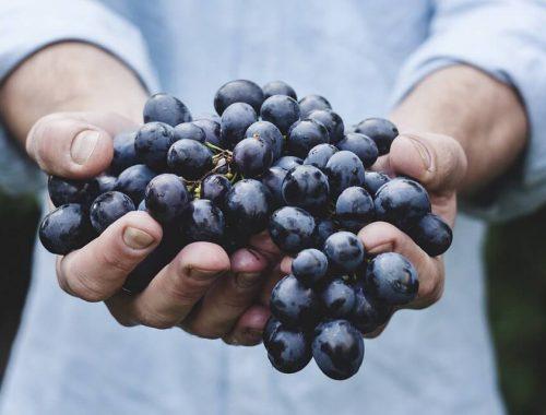 l'uva contiene i polifenoli