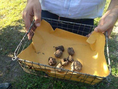 i tartufi, tra i cibi italiani patrimonio Unesco