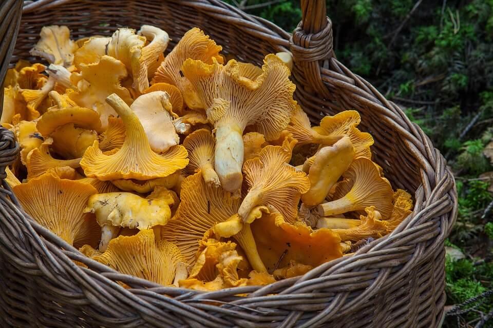 cesto per raccolta funghi