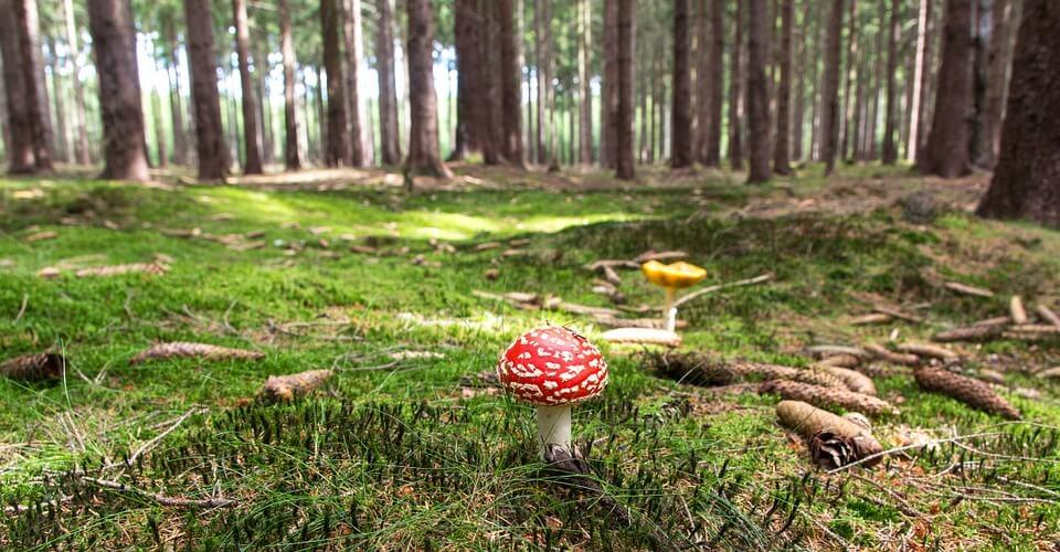 tipi di funghi che si trovano nei boschi