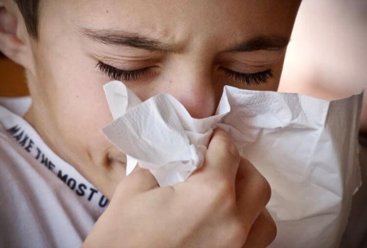 cibi che rafforzano le difese immunitarie