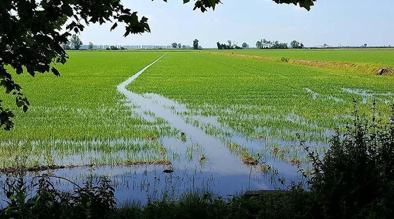 Santhià maratona del riso